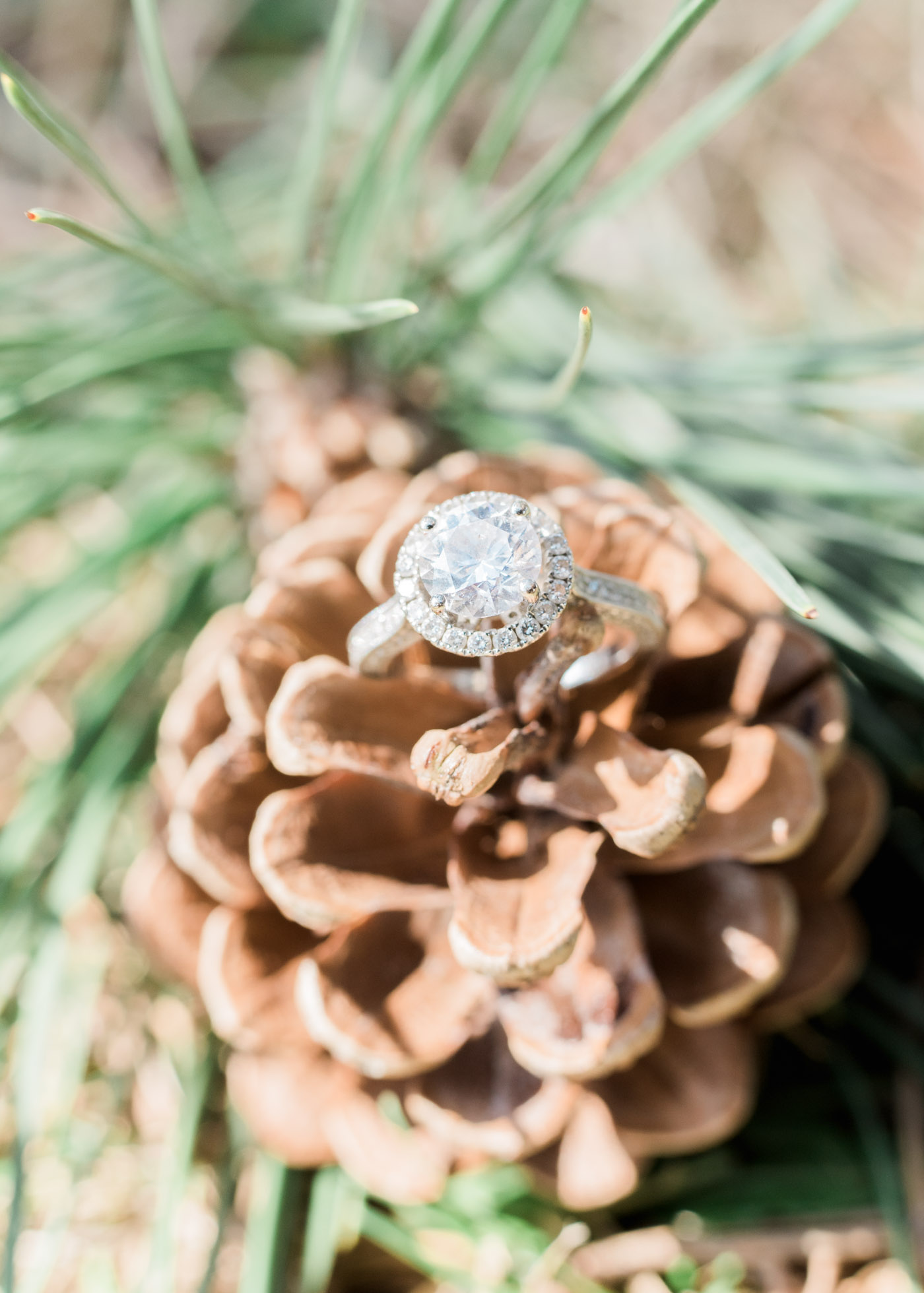 Macro shot of ring on pine cone in high park Toronto