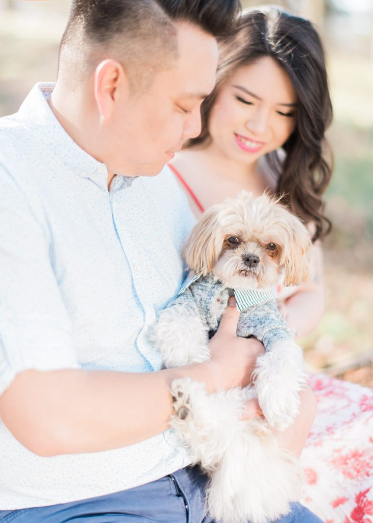 Couple holding cute dog during engagement shoot in Toronto at High Park