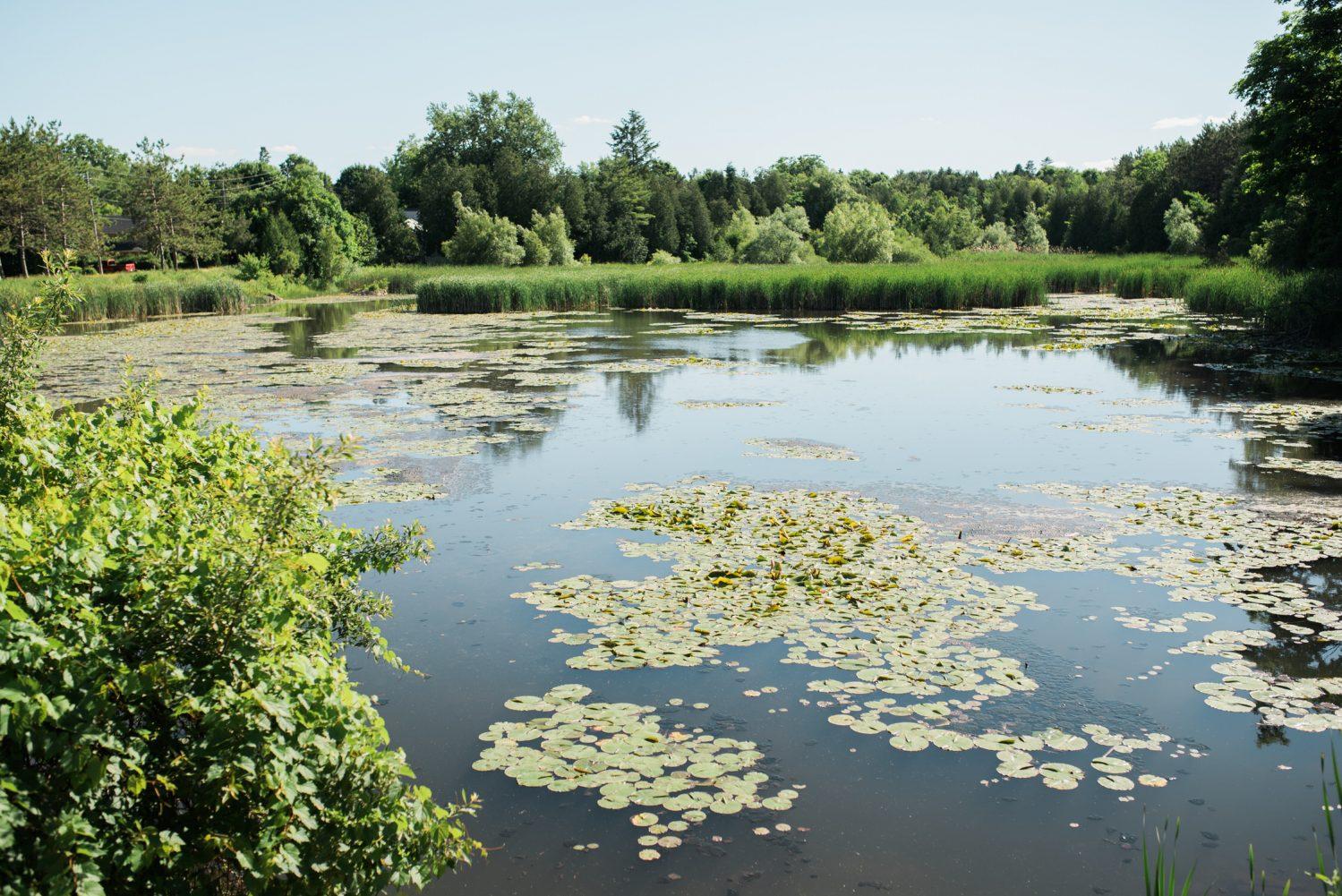 Alton Mill pond