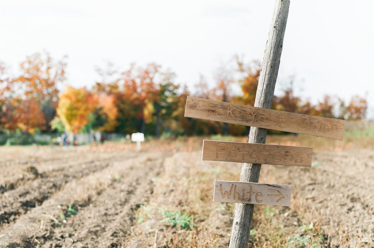 Apple sign at farm